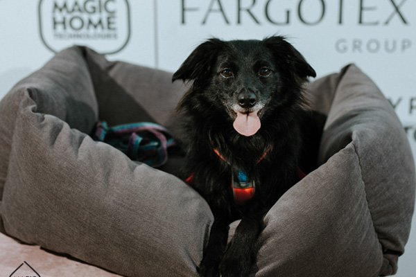 Event Pet Friendly | Magic Home Technologies by Fargotex